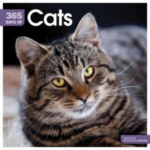 365 Days Cats Kalender 2022