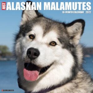 Alaskan Malamute Kalender 2022