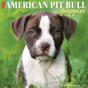 American Pit Bull Terrier Puppies Kalender 2022