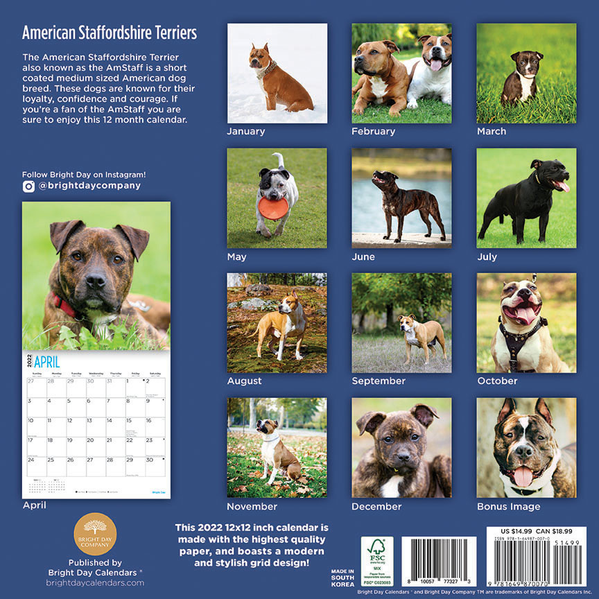 American Staffordshire Terrier Kalender 2022