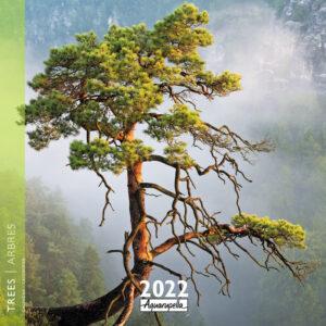 Arbres - Trees Kalender 2022