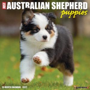 Australian Shepherd Puppies Kalender 2022