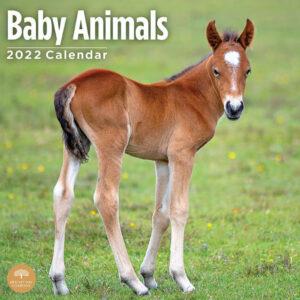 Baby Animals Kalender 2022