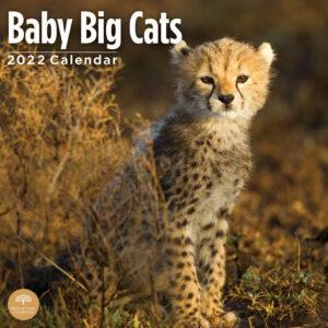 Baby Big Cats Kalender 2022