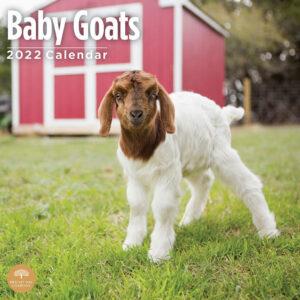 Baby Geiten Kalender 2022
