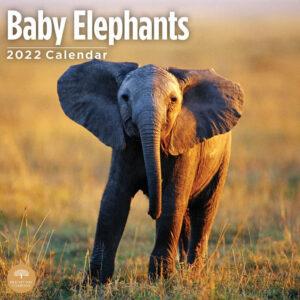 Baby Olifanten Kalender 2022