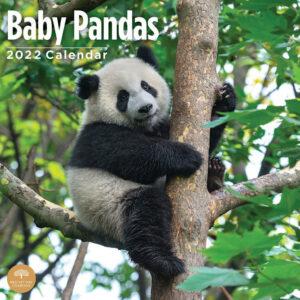 Baby Pandas Kalender 2022
