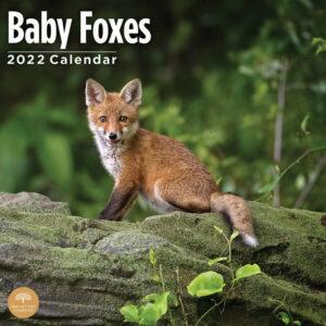 Baby Vossen Kalender 2022