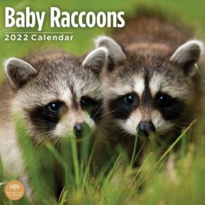 Baby Wasbeer Kalender 2022