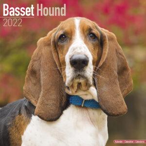 Basset Hound Kalender 2022