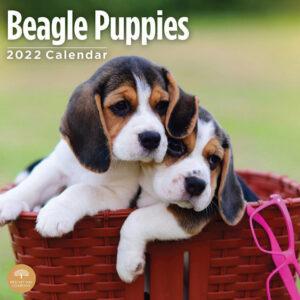 Beagle Puppies Kalender 2022
