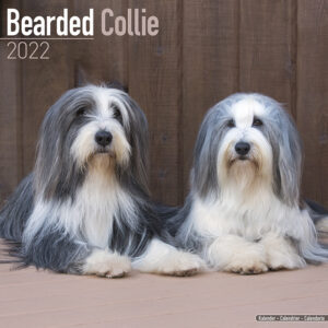Bearded Collie Kalender 2022