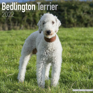 Bedlington Terrier Kalender 2022