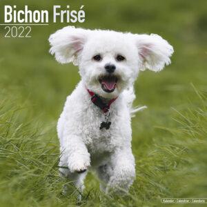 Bichon Frise Kalender 2022