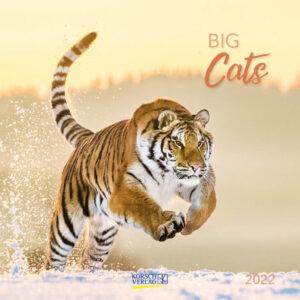 Big Cats Kalender 2022