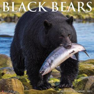 Black Bears Kalender 2022