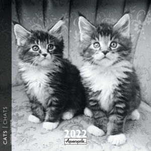 Black and White Katten Kalender 2022