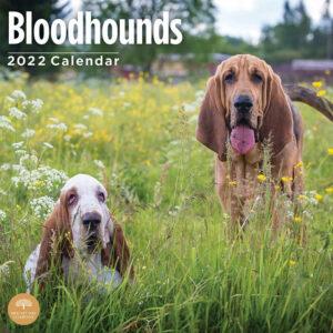 Bloedhond Kalender 2022