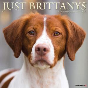 Brittany Spaniel Kalender 2022