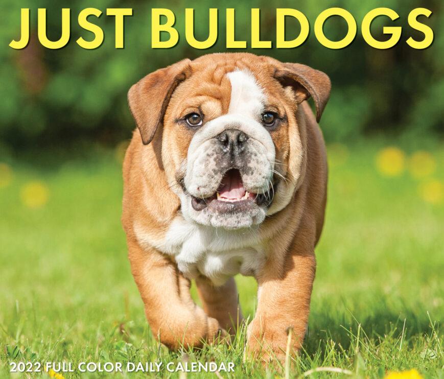 Engelse Bulldog Kalender 2022