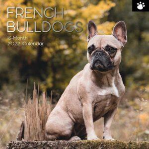 Franse Bulldog Kalender 2022