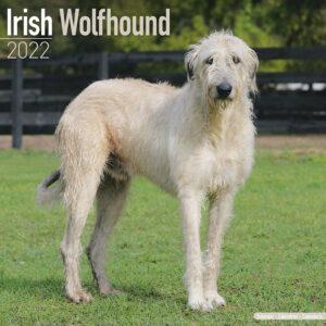 Ierse Wolfshond Kalender 2022
