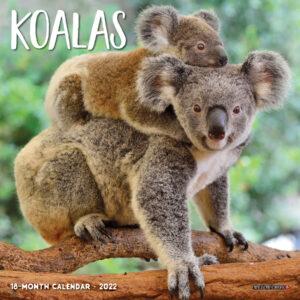 Koala Kalender 2022 Mini