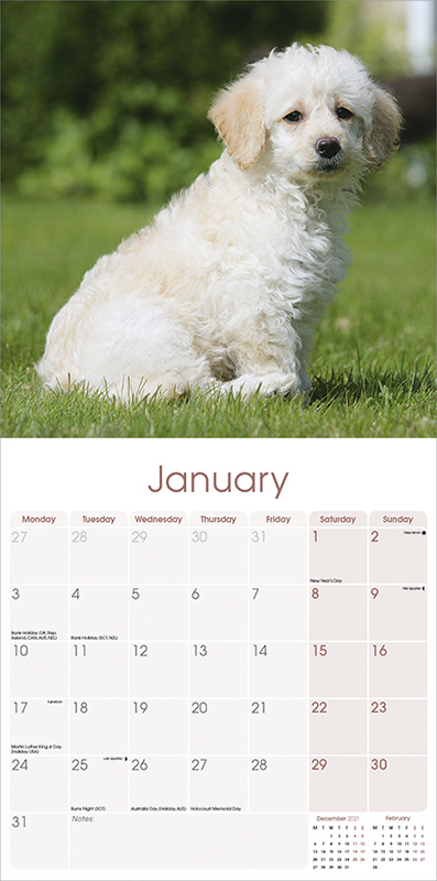 Labradoodle Kalender 2022