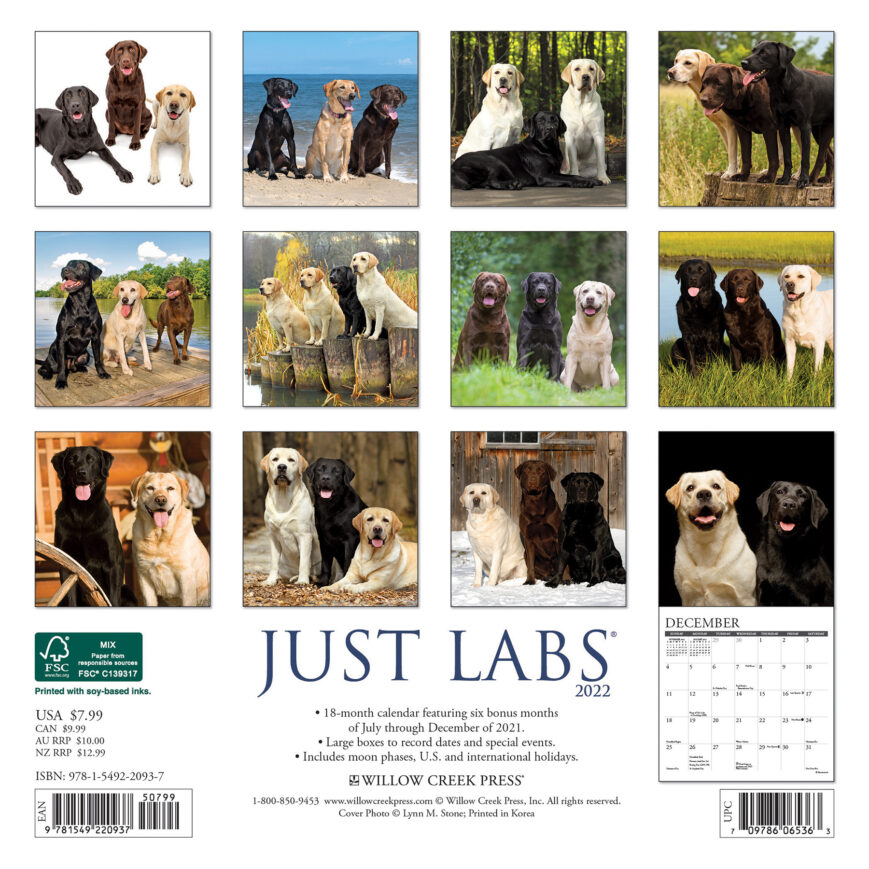 Labrador Retriever Kalender 2022 Mini