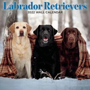 Labrador Retriever Kalender 2022