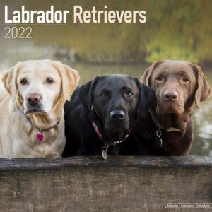 Labrador Retriever Mixed Kalender 2022
