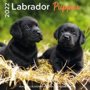 Labrador Retriever Puppies Kalender 2022