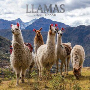 Llama Kalender 2022