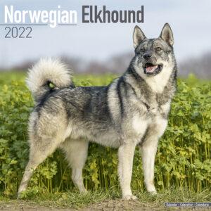 Noorse Elandhond Kalender 2022