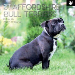 Staffordshire Bull Terrier Kalender 2022