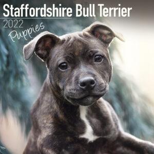 Staffordshire Bull Terrier Puppies Kalender 2022