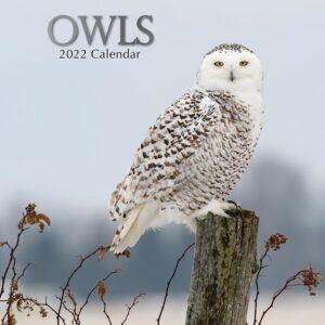 Uilen Kalender 2022