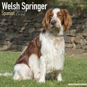 Welsh Springer Spaniel Kalender 2022