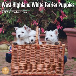 West Highland White Terrier Puppies Kalender 2022