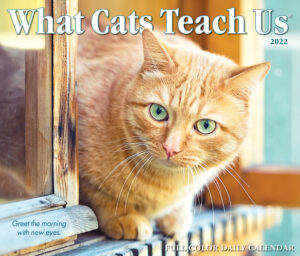 What Cats Teach Us Kalender 2022 Boxed