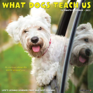 What Dogs Teach Us Kalender 2022
