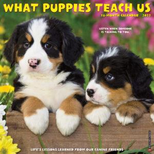 What Puppies Teach Us Kalender 2022