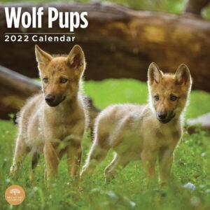 Wolf Pups Kalender 2022