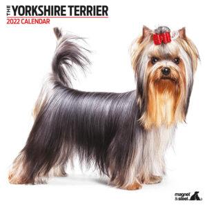 Yorkshire Terrier Kalender 2022 Modern