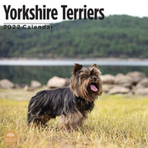 Yorkshire Terrier Kalender 2022