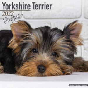 Yorkshire Terrier Kalender Puppies 2022