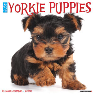 Yorkshire Terrier Puppies Kalender 2022