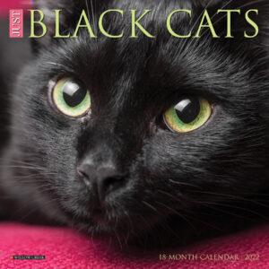 Zwarte Katten Kalender 2022 Mini